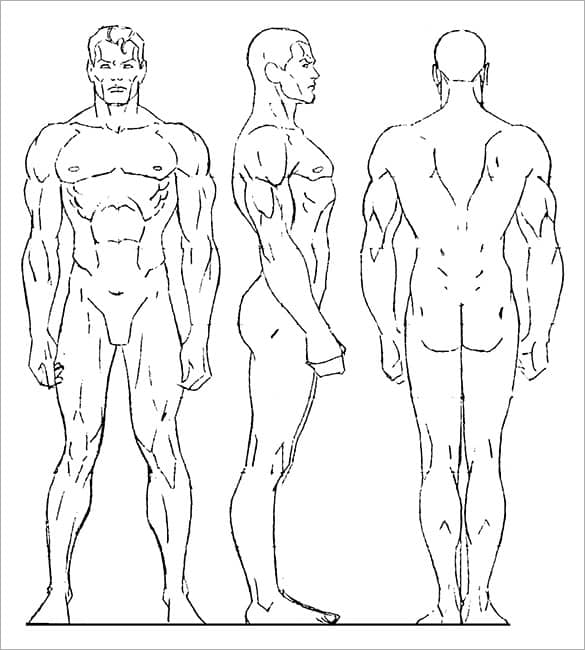 human outlines